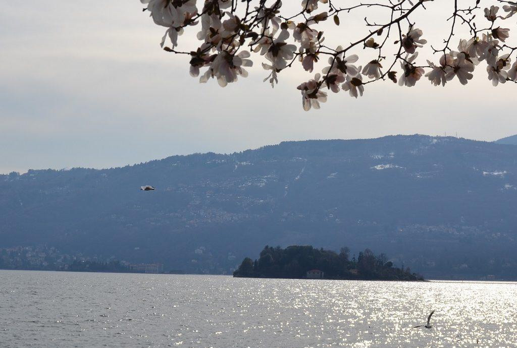 Blick auf Isola Madre von Pallanza Lago Maggiore