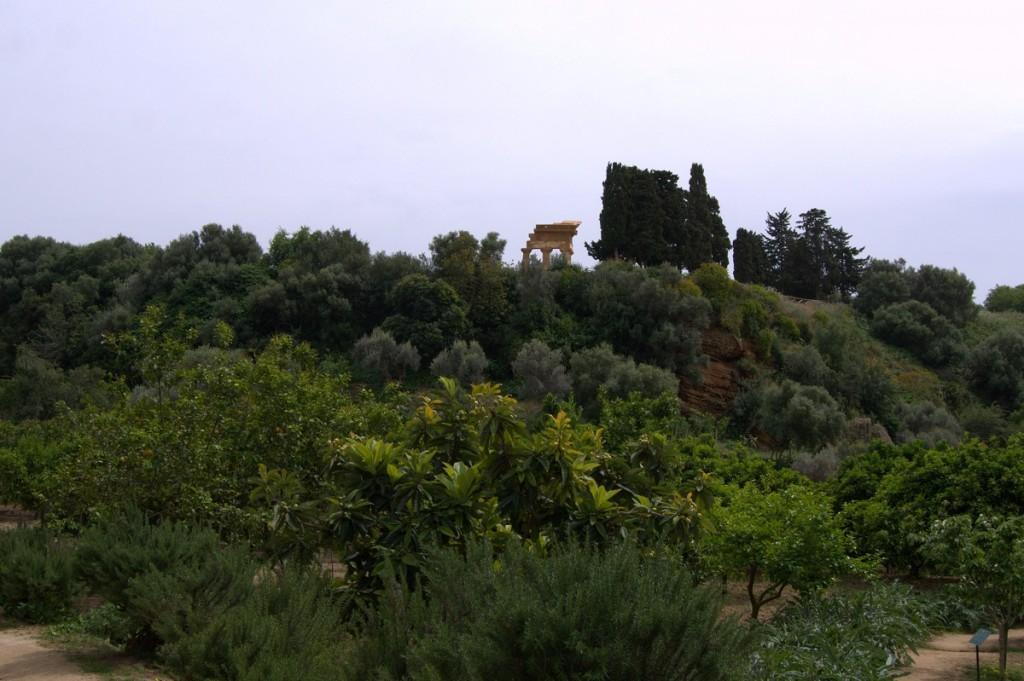 Garten der Kolymbetra