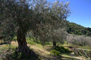 Olivenhain Antica Tindari