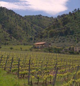 Sizilianisches Weingut